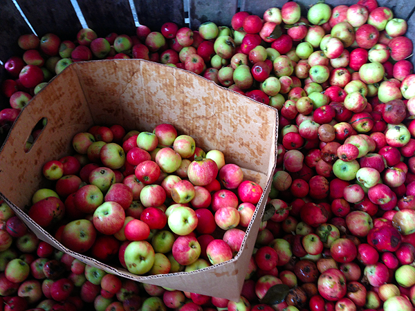 The Best Ciders | The Fresh Day
